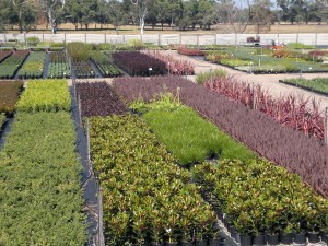 Meyer Nursery